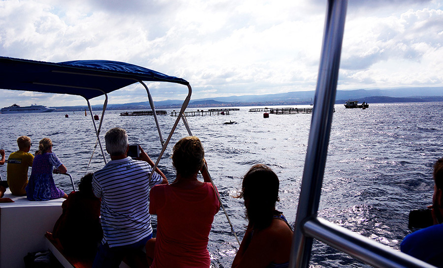 dolphin watching alghero